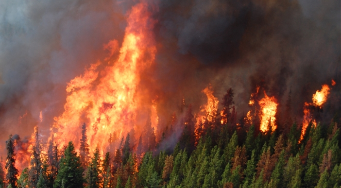 wildfire-status